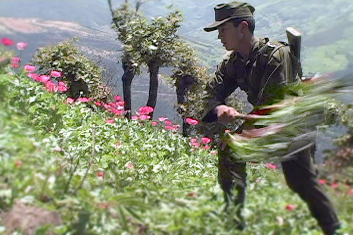 Mexican soldier destroying a poppy planting © Indymedia México